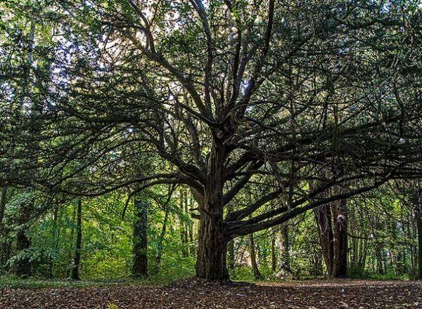 Donadea Forest Park | IntoKildare ie