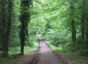 Donadea Forest Park Kildare