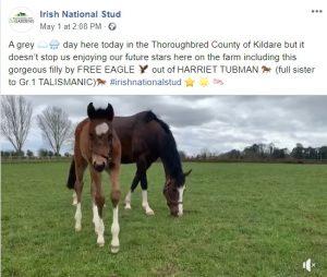 Irish National Stud Foal Video