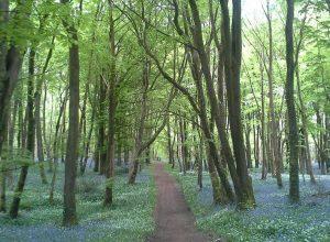 Killinthomas Wood Kildare