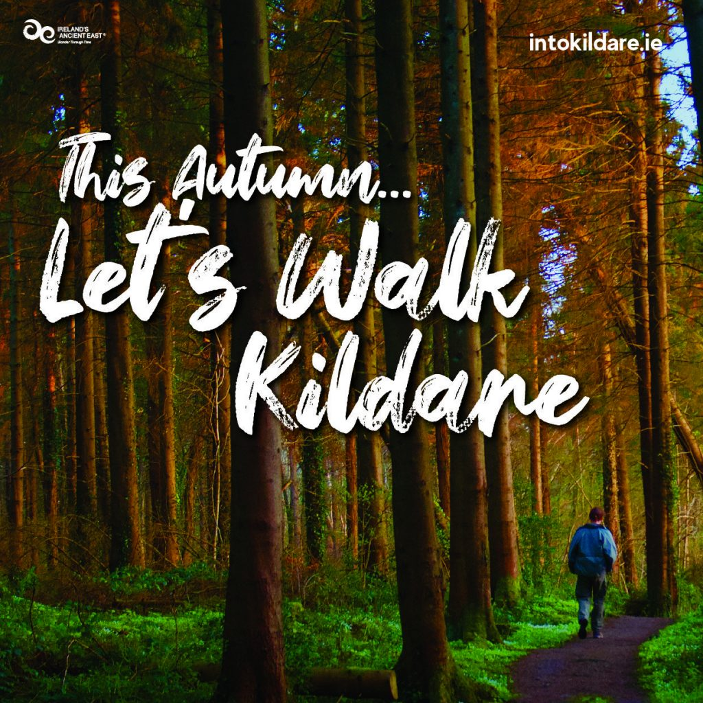 This Autumn Lets Walk in Kildare IntoKildare Forests