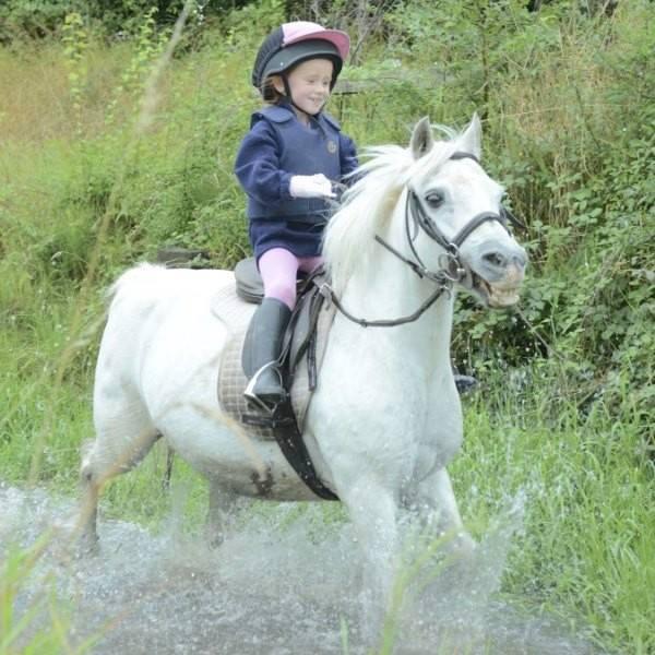 Abbeyfield Farm Pony Camps