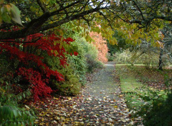 Coolcarrigan House & Gardens 6