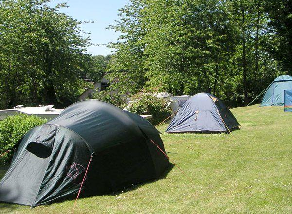 Forest Farm Caravan & Camping Park 4