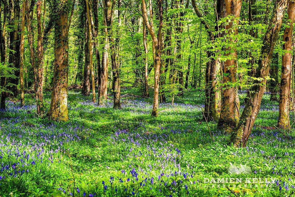 Killinthomas Woods - damienkellyphotography