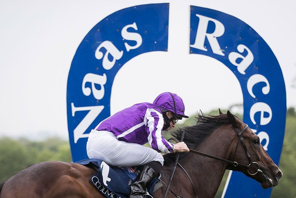 Naas Racecourse 2