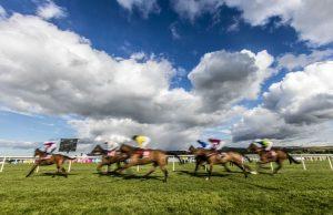 Punchestown Racecourse & Event Venue 8