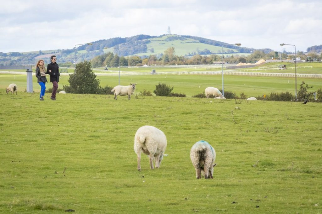 Curragh Plains 1