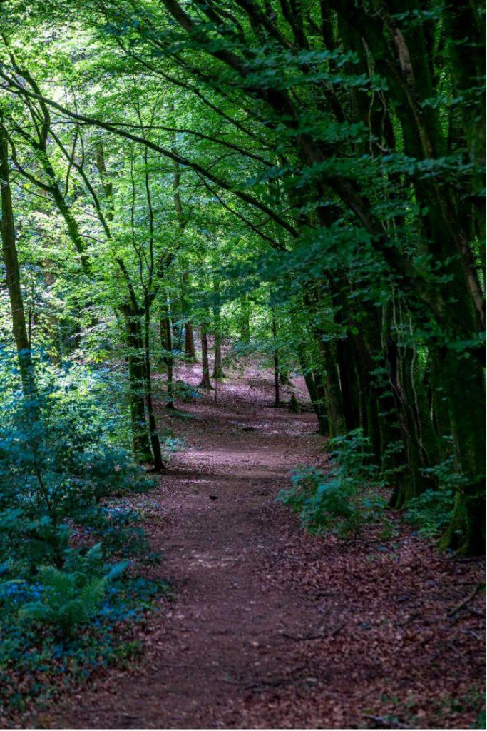 Mullaghreeland Woods Trees