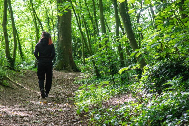Mullaghreeland Woods Walk